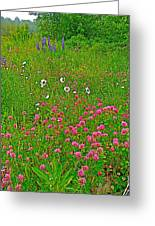 Cow Clover And Ox-eye Daisies On Campobello I Greeting Card