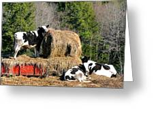 Cow Country Buffet Greeting Card