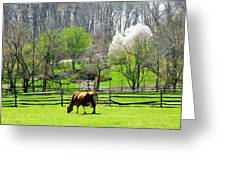 Cow Grazing In Pasture In Spring Greeting Card