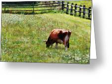 Cow Grazing In Pasture Greeting Card