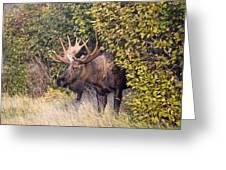 Cow Hunter Greeting Card