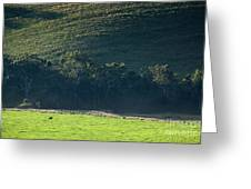 Cow In Field Greeting Card