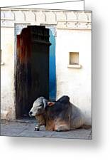 Cow In Temple Udaipur Rajasthan India Greeting Card
