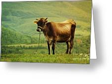 Cow In The Field Greeting Card by Jelena Jovanovic