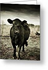 Cow In The Winter Pasture  Greeting Card