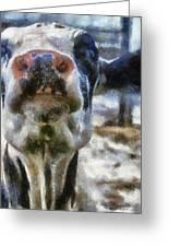 Cow Kiss Me Photo Art Greeting Card