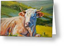 Cow Lying Down  Greeting Card