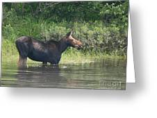 Cow Moose Breakfast Greeting Card