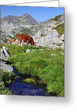 Cow On Alpine Pasture  Greeting Card