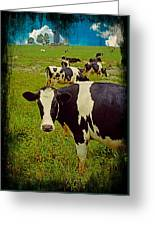 Cow On Farm Version - 2 Greeting Card