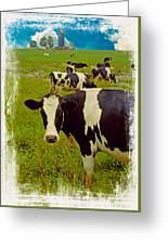 Cow On Farm Version - 4 Greeting Card