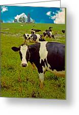 Cow On Farm Version - 5 Greeting Card