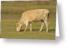 Cow Outdoors Greeting Card