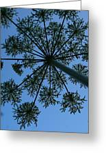 Cow Parsley Outlined Against A Summer Sky Greeting Card