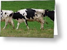 Cow Path Greeting Card