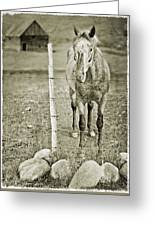 Cow Pony Greeting Card