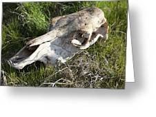 Cow Skull, New South Wales, Australia Greeting Card