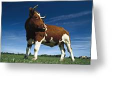 Cow Standing In Field Germany Greeting Card