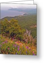 Cow Vetch In Cape Breton Highlands Np-ns Greeting Card