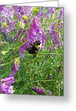 Cow Vetch Wildflowers And Bumble Bee Greeting Card
