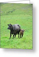 Cow With Calf On Thorpe Hillside Greeting Card