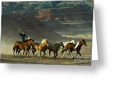 Cowboy Driving Horses Greeting Card