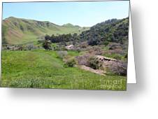 Cows Along The Rolling Hills Landscape Of The Black Diamond Mines In Antioch California 5d22294 Greeting Card