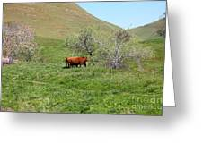 Cows Along The Rolling Hills Landscape Of The Black Diamond Mines In Antioch California 5d22303 Greeting Card by Wingsdomain Art and Photography