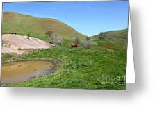 Cows Along The Rolling Hills Landscape Of The Black Diamond Mines In Antioch California 5d22304 Greeting Card