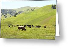 Cows Along The Rolling Hills Landscape Of The Black Diamond Mines In Antioch California 5d22328 Greeting Card