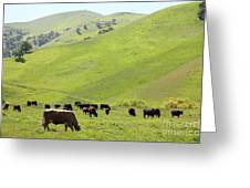Cows Along The Rolling Hills Landscape Of The Black Diamond Mines In Antioch California 5d22329 Greeting Card