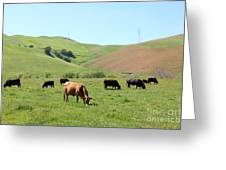 Cows Along The Rolling Hills Landscape Of The Black Diamond Mines In Antioch California 5d22355 Greeting Card