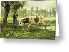 Cows At Pasture  Greeting Card