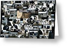 Cows Collage Greeting Card
