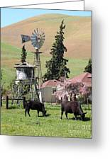 Cows Home On The Ranch At The Black Diamond Mines In Antioch California 5d22354 Greeting Card by Wingsdomain Art and Photography