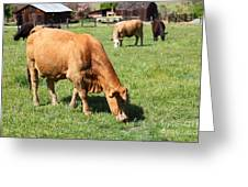 Cows Home On The Ranch At The Black Diamond Mines In Antioch California 5d22358 Greeting Card by Wingsdomain Art and Photography