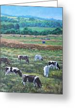 Cows In A Field In The Devon Countryside Greeting Card