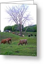 Cows In Rolling Hills Greeting Card