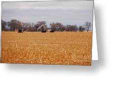 Cows In The Corn Greeting Card