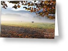 Cows In The Fog Greeting Card