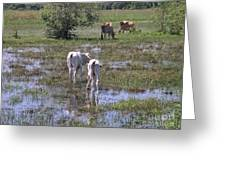 Cows In The Pantanal Greeting Card