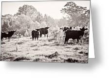 Cows Greeting Card by Karen Broemmelsick