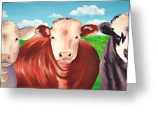 Cows Out To Pasture Greeting Card