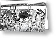 Cows Pencil Sketch Greeting Card