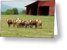 Cows8918 Greeting Card
