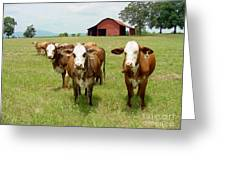 Cows8931 Greeting Card