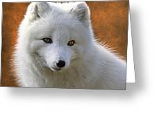 Coy Arctic Fox Greeting Card