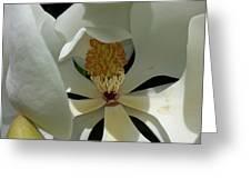 Coy Magnolia Greeting Card
