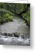Coyaba River Gardens 6 Greeting Card