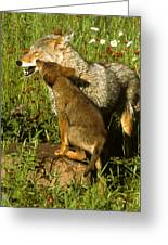 Coyote And Pup Greeting Card